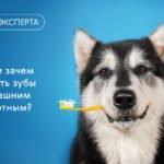 Чем и зачем чистить зубы домашним животным?